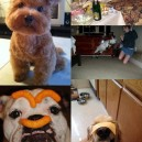 Most Weird Animal Pictures of 2012