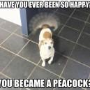 Overly happy dog