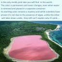 The only vividly pink lake in the world