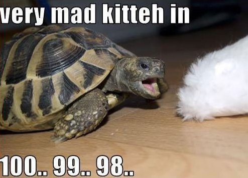 Very mad kitteh