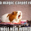 A whole new world!