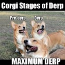Corgi Stages of Derp