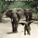 Dumbo, get down!