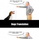 Dog translation