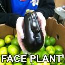 Face Plant