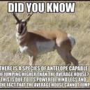 Fascinating Fact