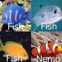 Fish vs. Nemo
