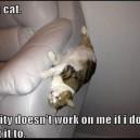 Gravity vs. Cats
