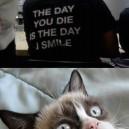 Grumpy Cat Is Amazed