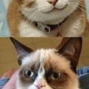 Grumpy cat vs. Happy cat