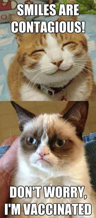 Grumpy cat vs. Happy cat