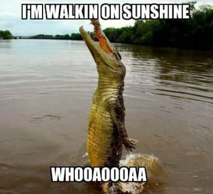 Happy alligator