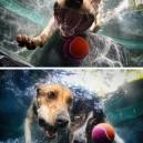 Happy dog moments