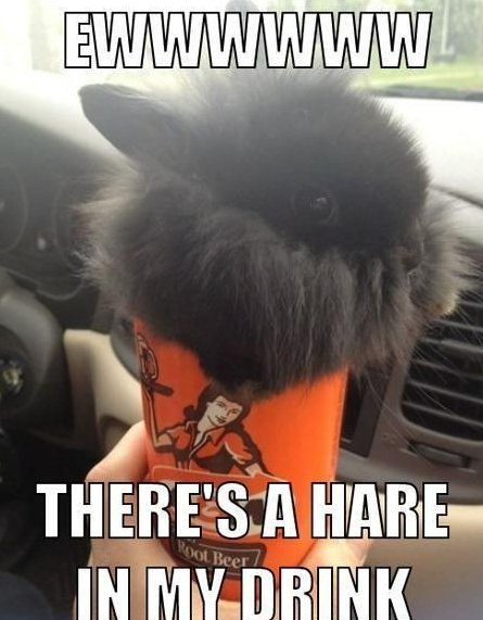 Hare In My Drink