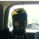 Hat for the dog