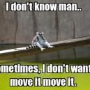 I like to move it move it!
