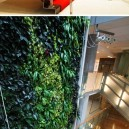 Living walls art