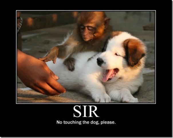 No touching the Dog