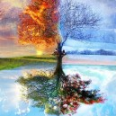 One Tree, Four Seasons