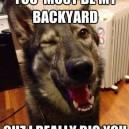 Pickup Pup