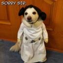 Princess Leia Cosplay