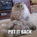 Put it back
