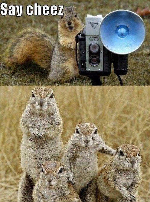 Say cheese_1