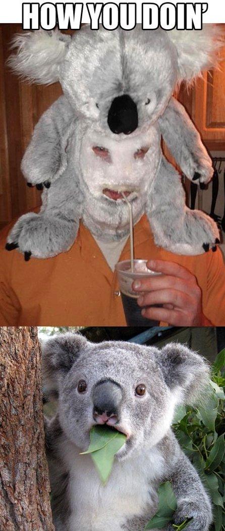 Seductive Koala