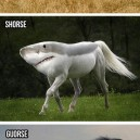 Silly horses
