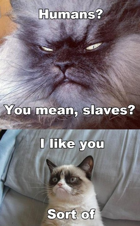 Sinister Cat Meets Grumpy Cat