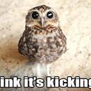 Stoner Owl