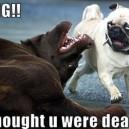 Surprised little dog