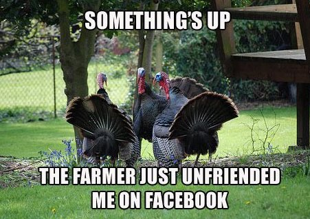 Suspicious turkeys