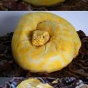 Tasty Snake