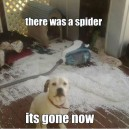 There was a spider…