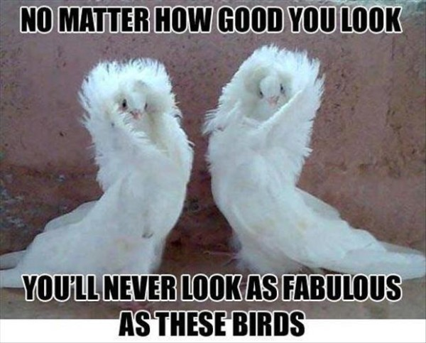 These birds are fabulous
