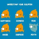 Understand your goldfish
