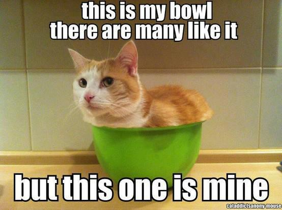 What is it with cats and bowls?