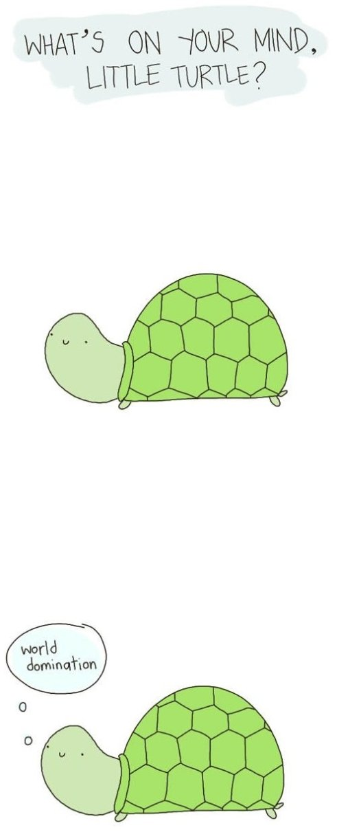 What is on your mind little turtle