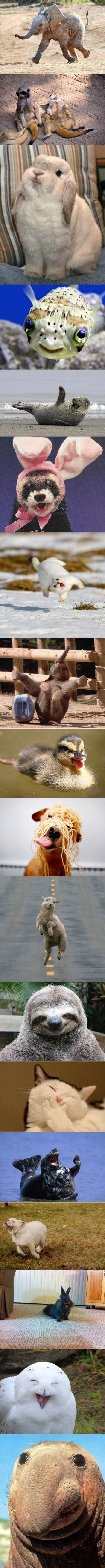 Worlds happiest animals
