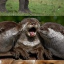 Animal kingdom kisses