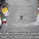 Awesome dog