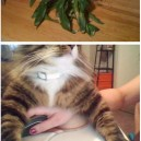 Cats Doing Evil Things