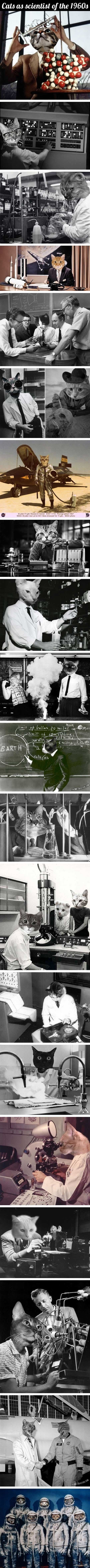 Cats as scientists