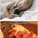 Cuddling with your pug