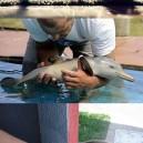 Cuteness of the baby animals