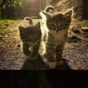 Cutest baby cats