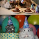 Funnest animal parties ever