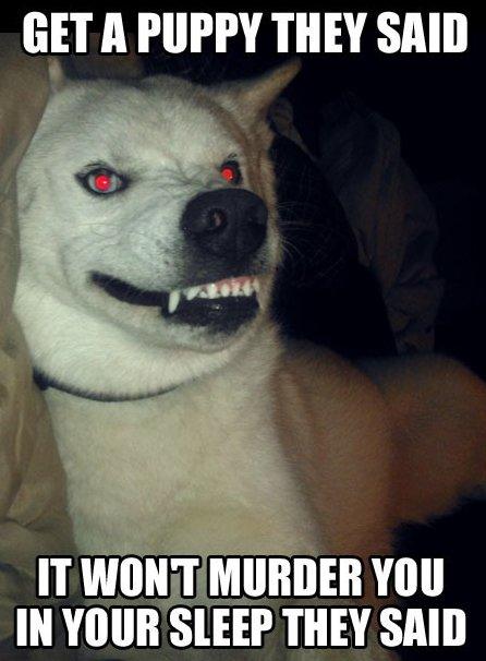 Get a Puppy