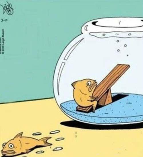 Goldfish Seesaw